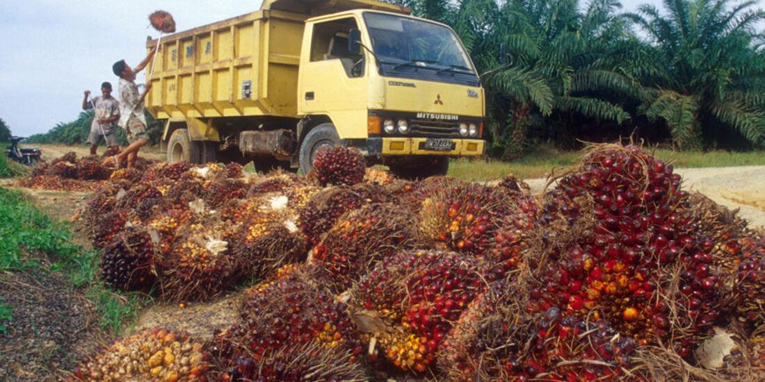 Alternative Kraftstoffe, Palmöl
