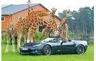 Corvette C6, Hodenhagen, Giraffen