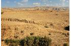 Fiesta in Wüste