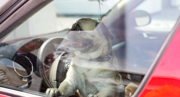 Hitze und Hund im Auto Sommerzeit Klimaanlage