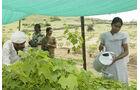 Kleinbauern in Indien