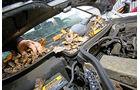 Mercedes-Benz 250 D, Laub, Heckscheibe