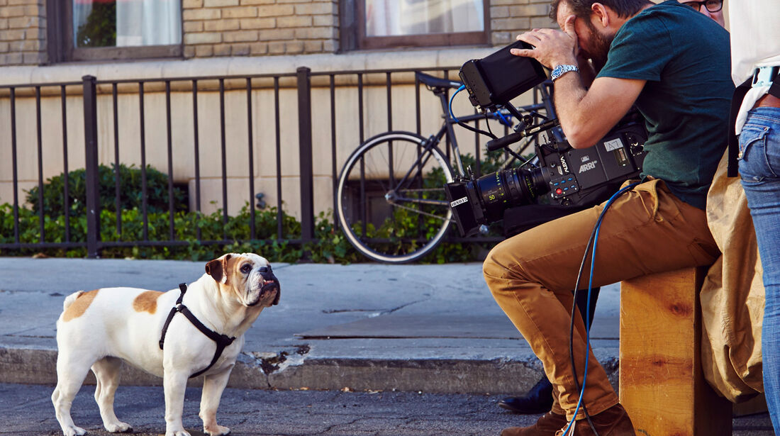 Mini, Werbespot, Hund