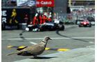 Vogel - Formel 1 - GP Monaco - 26. Mai 2013
